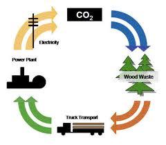 Biomasgraph